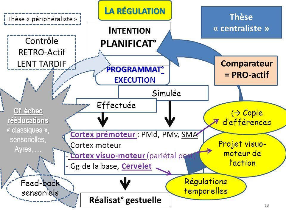DECISION I NTENTION PLANIFICAT° PROGRAMMAT° PROGRAMMAT° EXECUTION Simulée Contrôle RETRO-Actif LENT TARDIF - Cortex prémoteur : PMd, PMv, SMA - Cortex