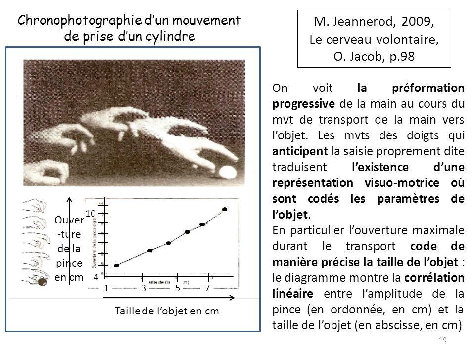 Ouver -ture de la pince en cm Taille de lobjet en cm 10 753 4 1 M. Jeannerod, 2009, Le cerveau volontaire, O. Jacob, p.98 Chronophotographie dun mouve