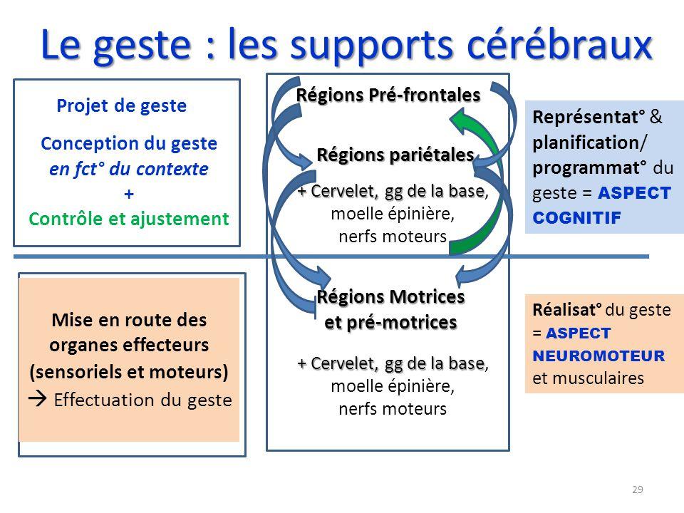 Le geste : les supports cérébraux Régions Pré-frontales Régions pariétales Régions Motrices et pré-motrices + Cervelet, gg de la base + Cervelet, gg d