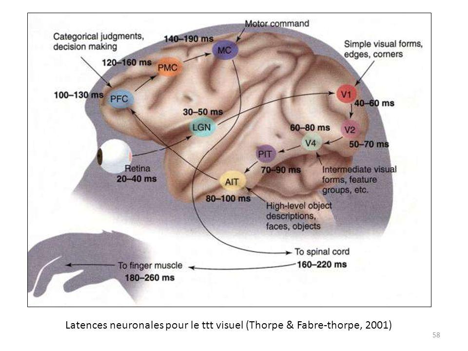 Latences neuronales pour le ttt visuel (Thorpe & Fabre-thorpe, 2001) 58