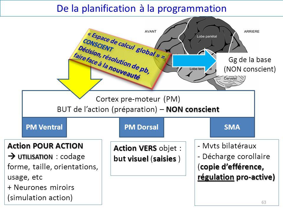 De la planification à la programmation PM VentralPM DorsalSMA Action POUR ACTION UTILISATION Action POUR ACTION UTILISATION : codage forme, taille, or