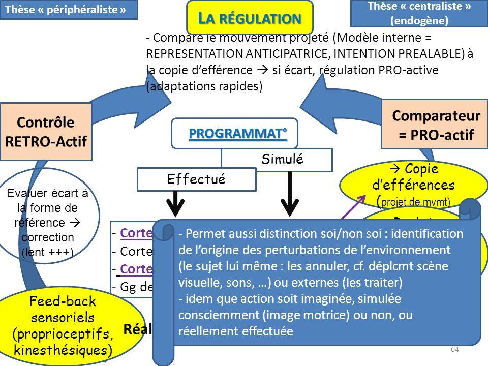 PROGRAMMAT° Simulé Contrôle RETRO-Actif - Cortex prémoteur : PMd, PMv, SMA - Cortex moteur - Cortex visuo-moteur (pariétal post) - Gg de la base, Cerv