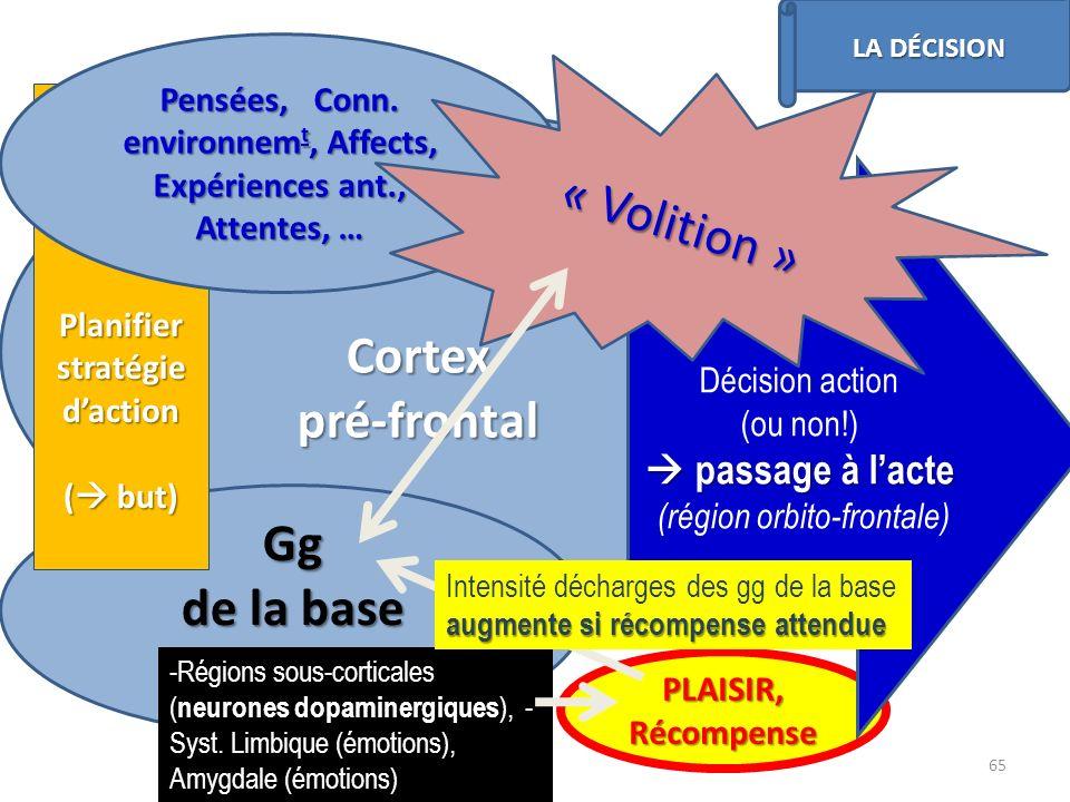 Cortexpré-frontal Gg de la base Planifier stratégie daction ( but) Pensées, Conn. environnem t, Affects, Expériences ant., Attentes, … PLAISIR, Récomp