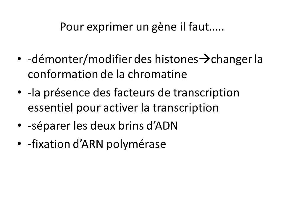 Pour exprimer un gène il faut….. -démonter/modifier des histones changer la conformation de la chromatine -la présence des facteurs de transcription e