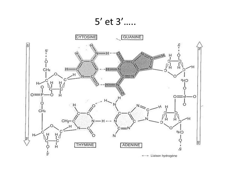 Structure des Ribosomes