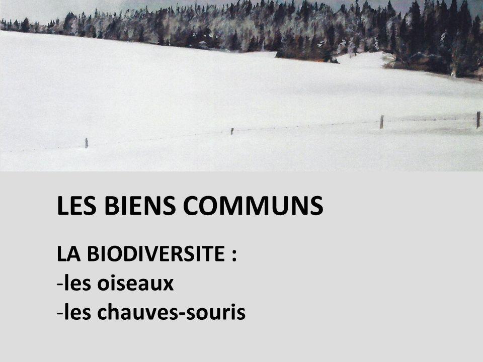 LES BIENS COMMUNS LA BIODIVERSITE : -les oiseaux -les chauves-souris