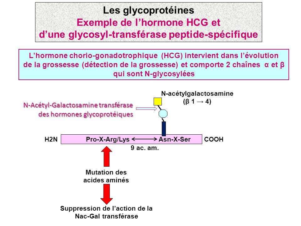 Lhormone chorio-gonadotrophique (HCG) intervient dans lévolution de la grossesse (détection de la grossesse) et comporte 2 chaînes α et β qui sont N-g