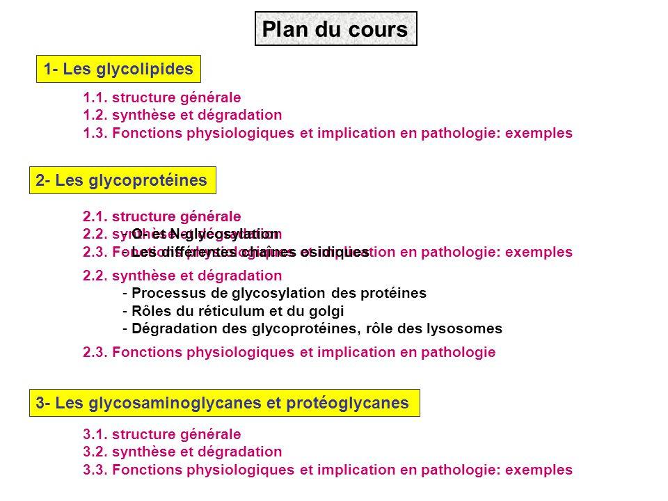 Plan du cours 1- Les glycolipides 3- Les glycosaminoglycanes et protéoglycanes 2- Les glycoprotéines 2.1. structure générale 2.2. synthèse et dégradat