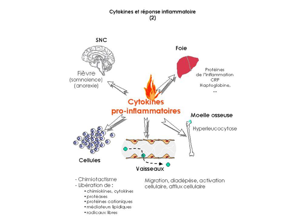 Protéines de linflammation 6/ Chémokines Protéines dont les récepteurs qui agissent avec la prot G Attrait dautres cellules (PNN) sur le lieu de linflammation en Synthétisant des molécules dadhésion But : attirer des Cell qui vont permettre la phagocytose des débris cellulaire ou pathogènes