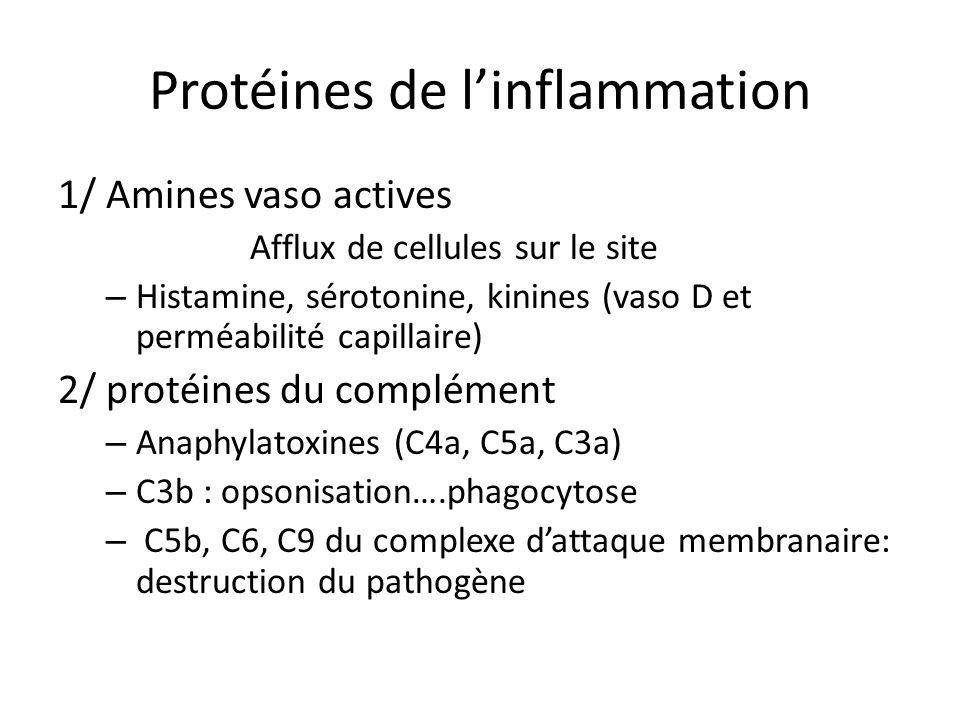 Protéines de linflammation 1/ Amines vaso actives Afflux de cellules sur le site – Histamine, sérotonine, kinines (vaso D et perméabilité capillaire)