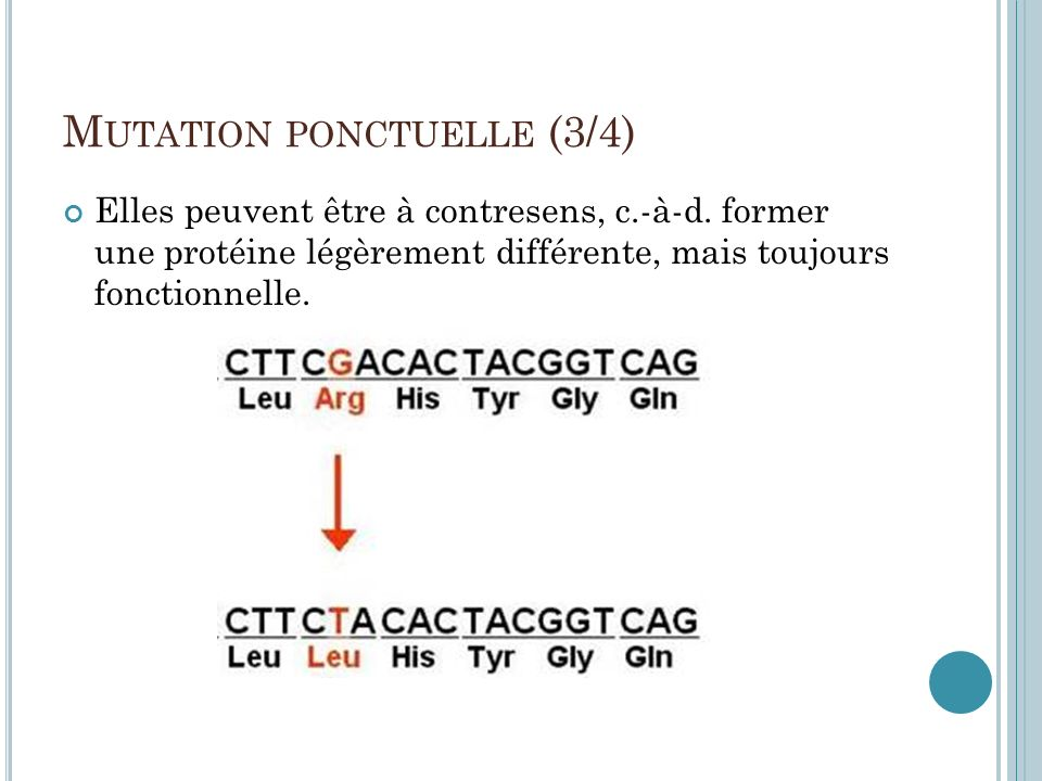 M UTATION PONCTUELLE (3/4) Elles peuvent être à contresens, c.-à-d. former une protéine légèrement différente, mais toujours fonctionnelle.