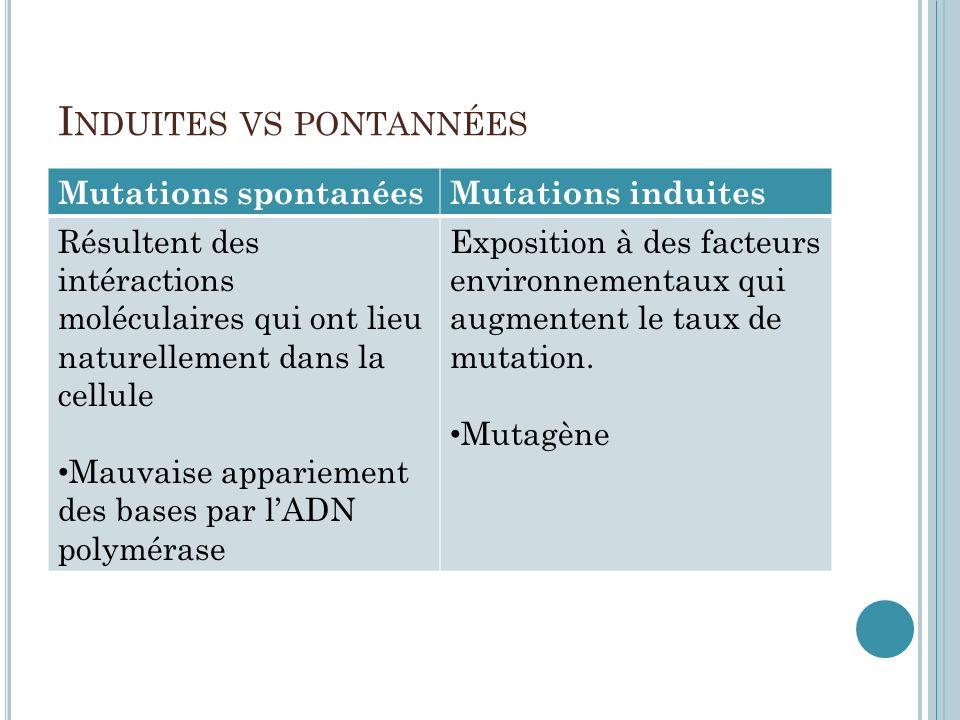 I NDUITES VS PONTANNÉES Mutations spontanéesMutations induites Résultent des intéractions moléculaires qui ont lieu naturellement dans la cellule Mauv