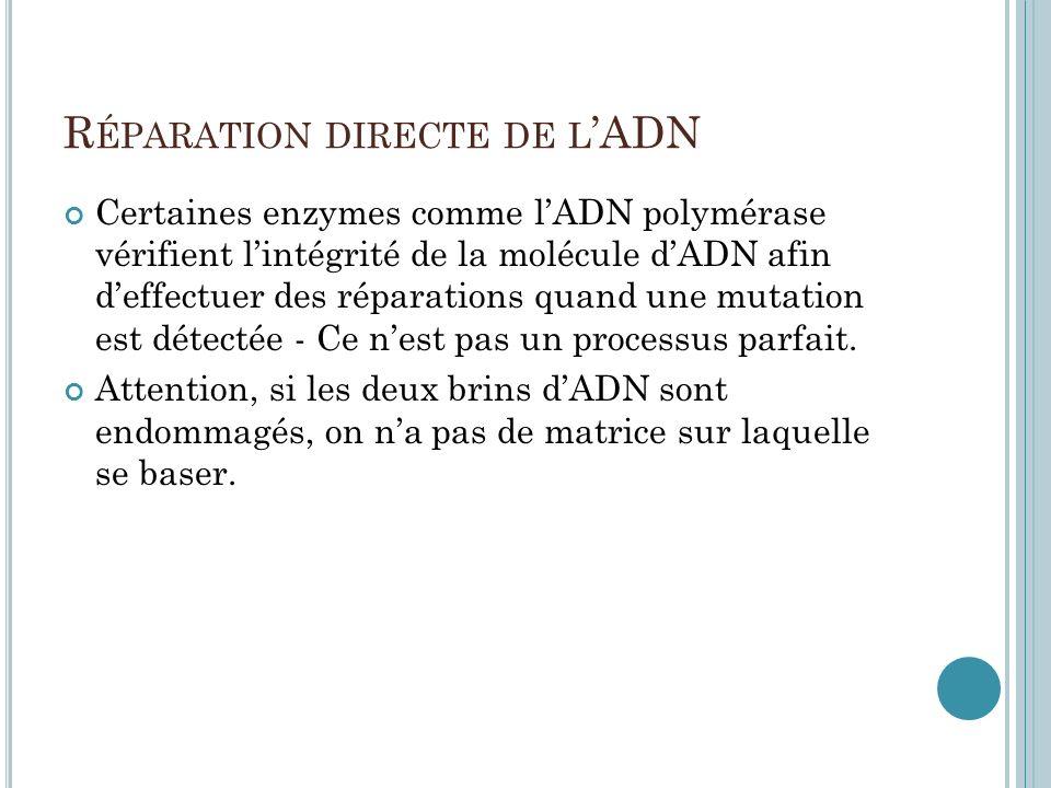 R ÉPARATION DIRECTE DE L ADN Certaines enzymes comme lADN polymérase vérifient lintégrité de la molécule dADN afin deffectuer des réparations quand un