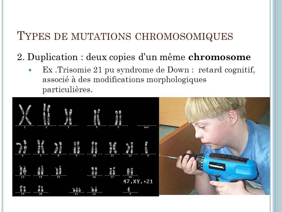 T YPES DE MUTATIONS CHROMOSOMIQUES 2. Duplication : deux copies dun même chromosome Ex.Trisomie 21 pu syndrome de Down : retard cognitif, associé à de