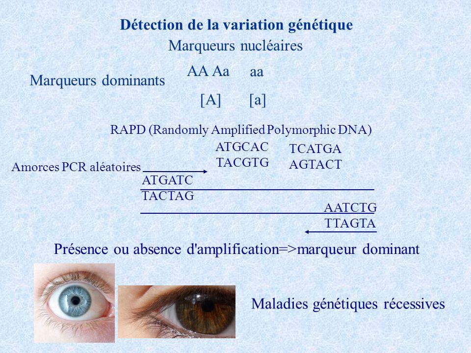 Enzymes mRNA +- CTCTCTCT AGAGAGAG Primer1 Primer2 PCR CTCTCTCTCT AGAGAGAGAG Primer1 Primer2 + - Microsatellites Electrophorèse AUGCAGCCAUAGGCG Phe-Pro-Leu-Ileu-Val RFLP, MLST, SNP… Détection de la variation génétique: marqueurs codominants A1A1 A1A2 A2A2 Hypothèse importante pour les inférences=Neutralité