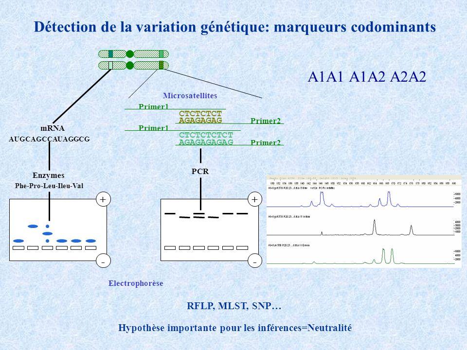 Sousdominance AAAaaa Fitness11-s1 Fréquences t+1 2 allèles, A et a de fréquence p t et 1-p t à la génération t