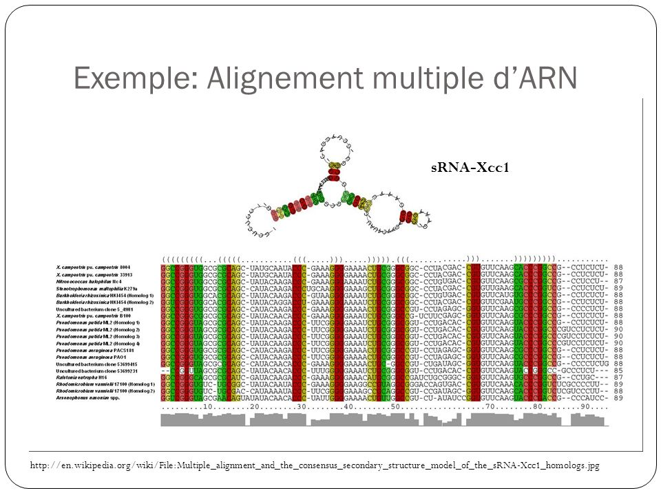 Exemple: Alignement multiple dARN http://en.wikipedia.org/wiki/File:Multiple_alignment_and_the_consensus_secondary_structure_model_of_the_sRNA-Xcc1_homologs.jpg sRNA-Xcc1