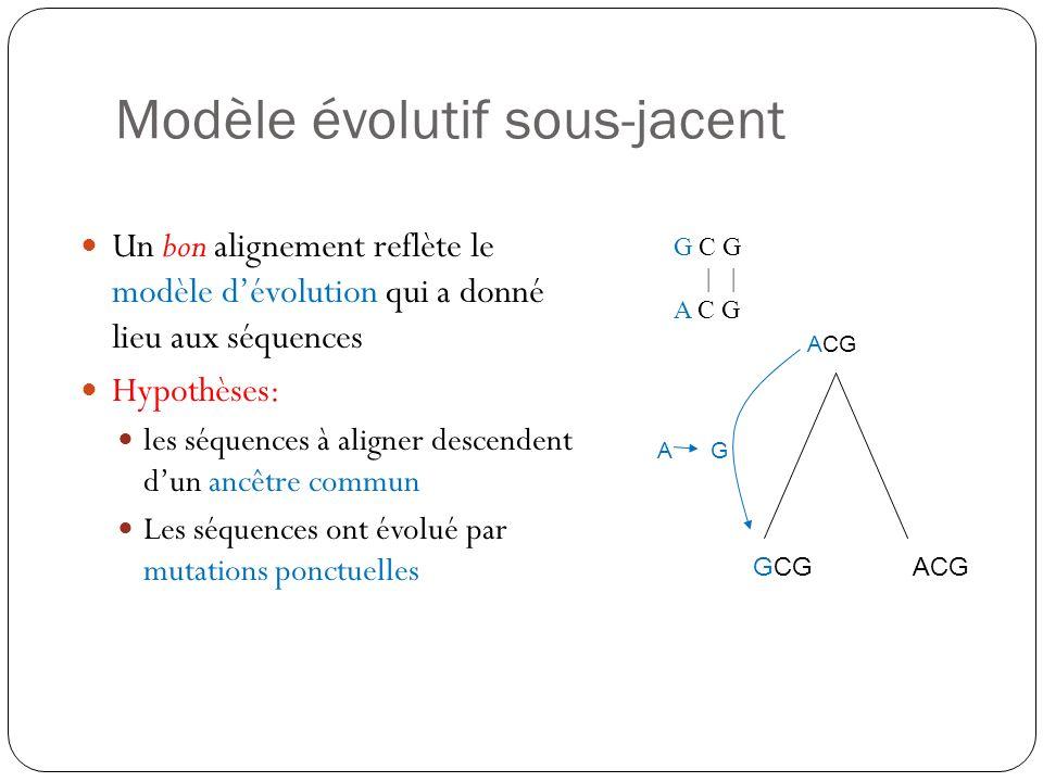Modèle évolutif sous-jacent Un bon alignement reflète le modèle dévolution qui a donné lieu aux séquences Hypothèses: les séquences à aligner descende