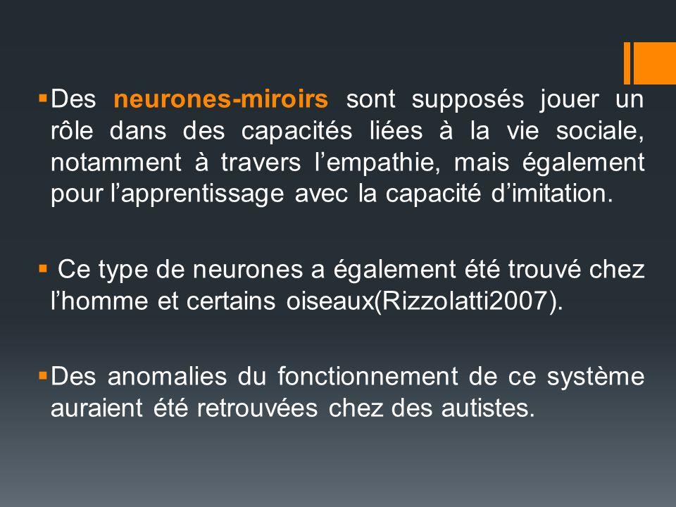 Des neurones-miroirs sont supposés jouer un rôle dans des capacités liées à la vie sociale, notamment à travers lempathie, mais également pour lappren