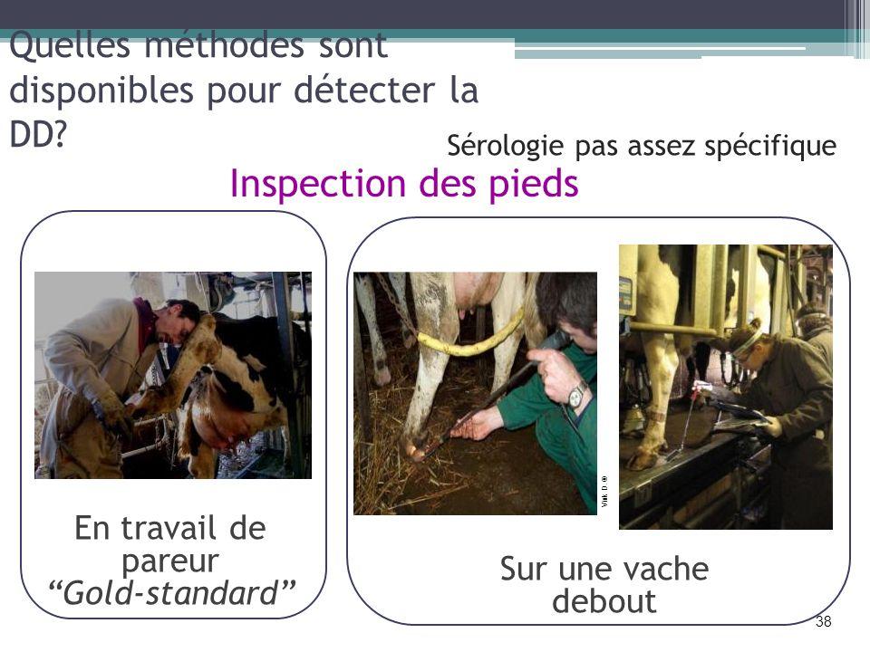 Quelles méthodes sont disponibles pour détecter la DD? Inspection des pieds En travail de pareur Gold-standard Sur une vache debout Vink D. ® 38 Sérol