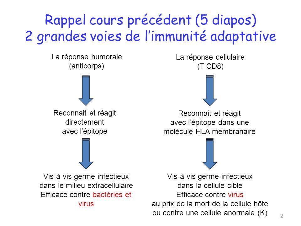 Rappel cours précédent (5 diapos) 2 grandes voies de limmunité adaptative 2 La réponse humorale (anticorps) Reconnait et réagit directement avec lépitope La réponse cellulaire (T CD8) Reconnait et réagit avec lépitope dans une molécule HLA membranaire Vis-à-vis germe infectieux dans le milieu extracellulaire Efficace contre bactéries et virus Vis-à-vis germe infectieux dans la cellule cible Efficace contre virus au prix de la mort de la cellule hôte ou contre une cellule anormale (K)