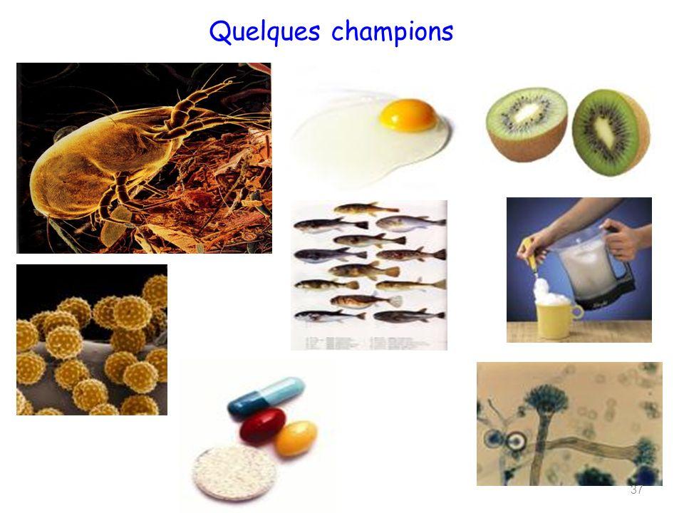 Quelques champions 37