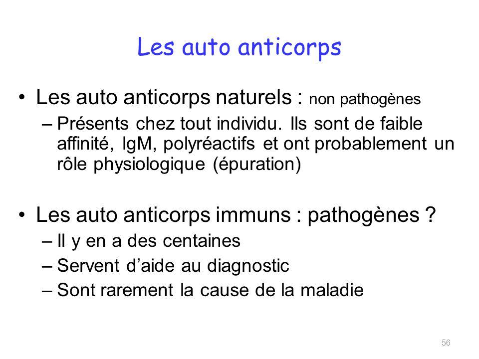 Les auto anticorps Les auto anticorps naturels : non pathogènes –Présents chez tout individu.