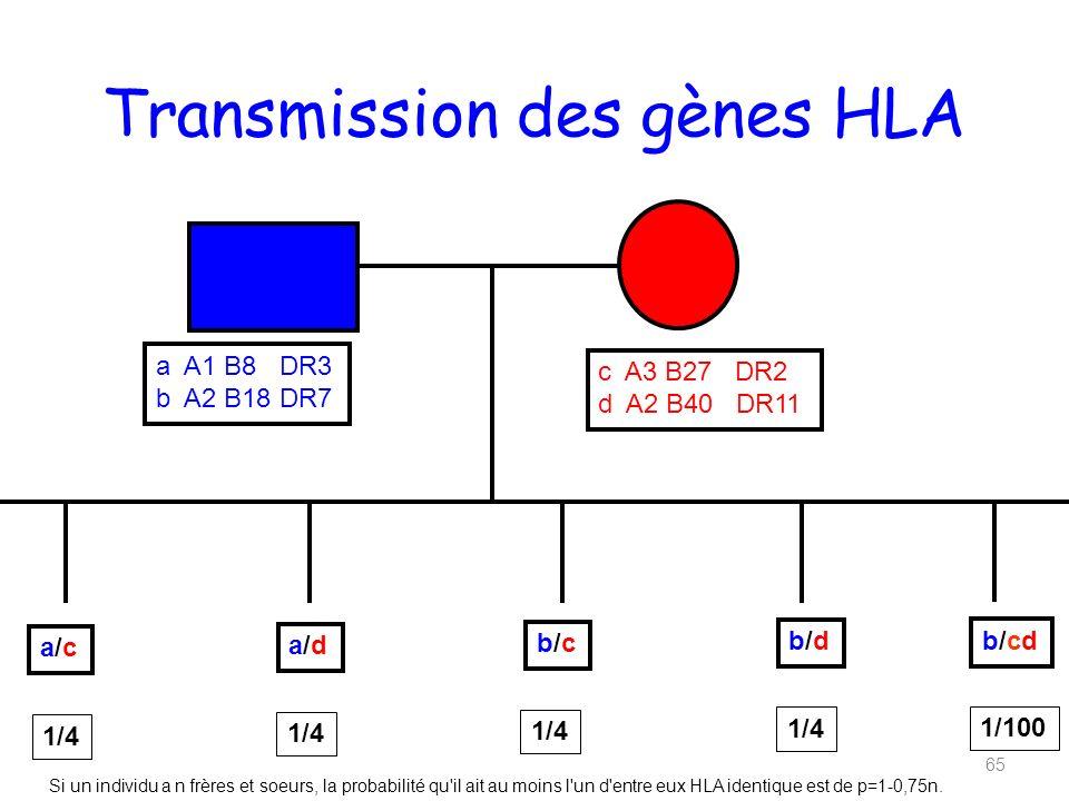 Transmission des gènes HLA 65 a A1 B8 DR3 b A2 B18 DR7 c A3 B27 DR2 d A2 B40 DR11 a/ca/c a/da/d b/cb/c b/db/d 1/4 b/cdb/cd 1/100 Si un individu a n frères et soeurs, la probabilité qu il ait au moins l un d entre eux HLA identique est de p=1-0,75n.