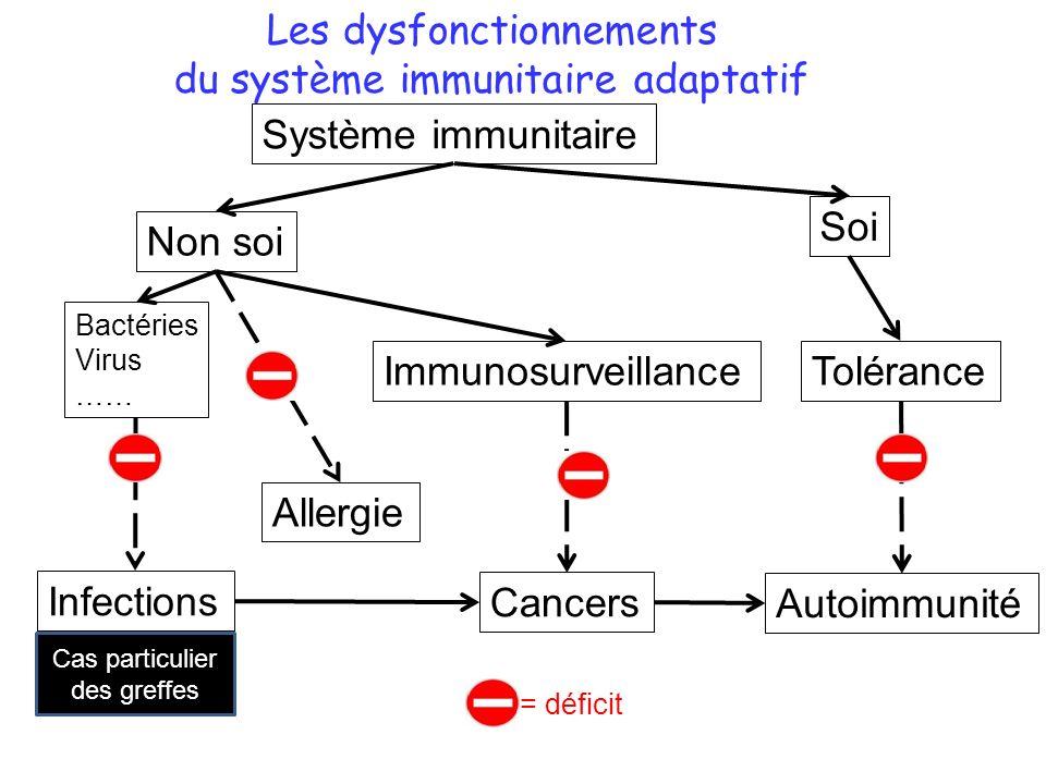 Les dysfonctionnements du système immunitaire adaptatif Système immunitaire Immunosurveillance Cancers Non soi Tolérance Autoimmunité Allergie Infections Cas particulier des greffes Soi Bactéries Virus …… = déficit