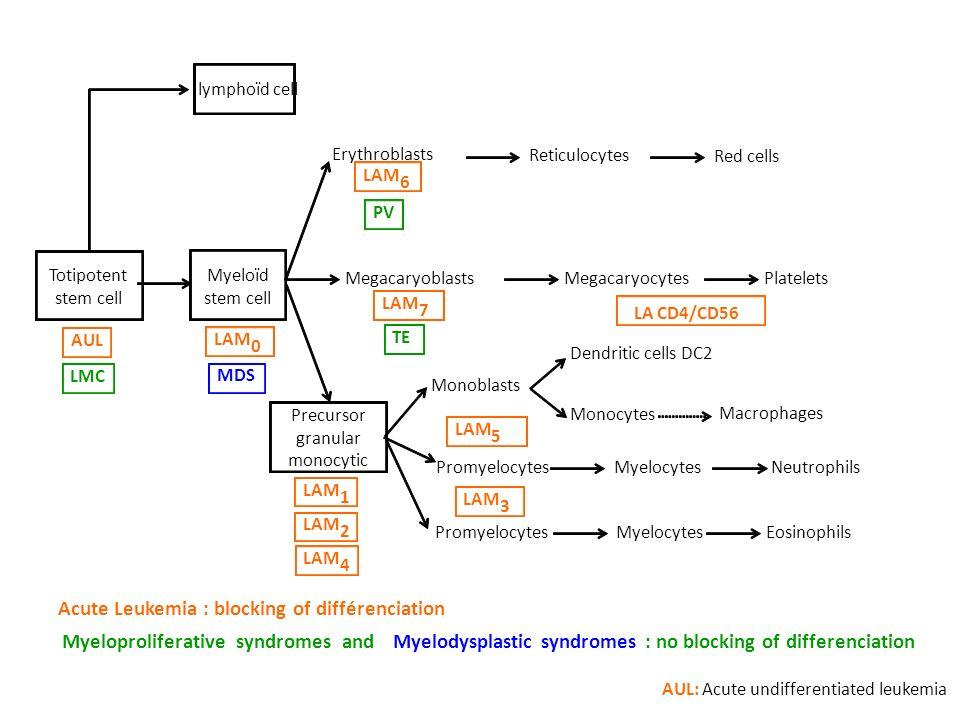 Megacaryoblasts MegacaryocytesPlatelets Erythroblasts Red cells Reticulocytes Dendritic cells DC2 Monocytes Macrophages Promyelocytes MyelocytesNeutrophils Precursor granular monocytic MyelocytesEosinophilsPromyelocytes MDS LAM 1 2 4 3 5 LA CD4/CD56 AUL LAM 0 6 7 Acute Leukemia : blocking of différenciation AUL: Acute undifferentiated leukemia PV LMC TE Myeloproliferative syndromes andMyelodysplastic syndromes: no blocking of differenciation Monoblasts lymphoïd cell Totipotent stem cell Myeloïd stem cell
