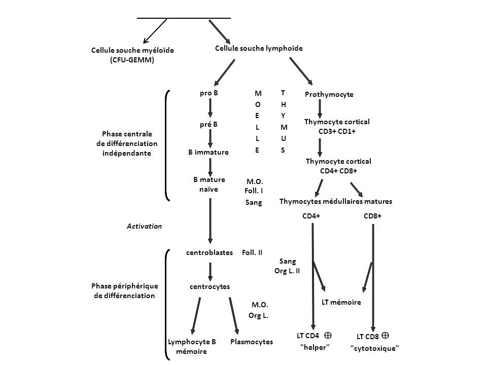 Syndrome de Sézary9701/3 LNH cutané T rare (< 5 %) Associe : o adénopathies o érythrodermie o cellules malignes cérébriformes monoclonales T dans le sang o > 1000 cellules de Sézary/mm3 dans le sang Phénotype : CD3, CD4, CD7Θ Pronostic : mauvais