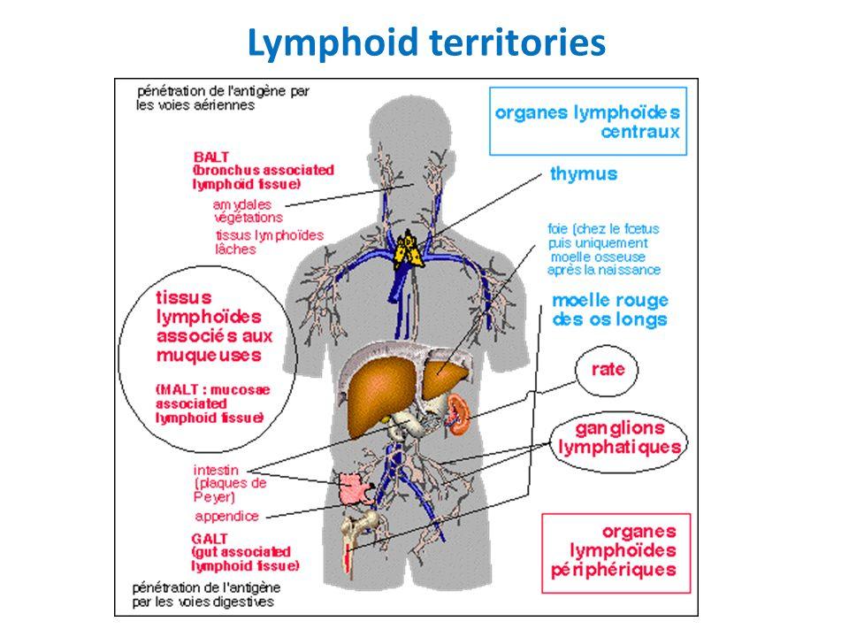 Lymphomes T périphériques, NOS 9702/3 Ensemble hétérogène de lymphomes T matures, nodaux ou extranodaux qui ne correspondent à aucune entité décrite...