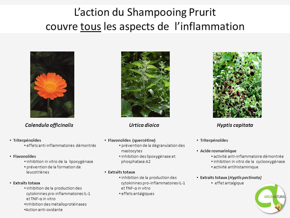 Rôle des shampooings Représentation de la couche cornée illustrant limportance des lipides Cornéocyte Enveloppe lipidique Ciment lipidique intercellul