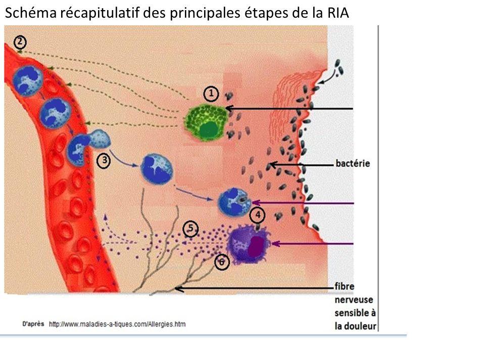 Schéma récapitulatif des principales étapes de la RIA