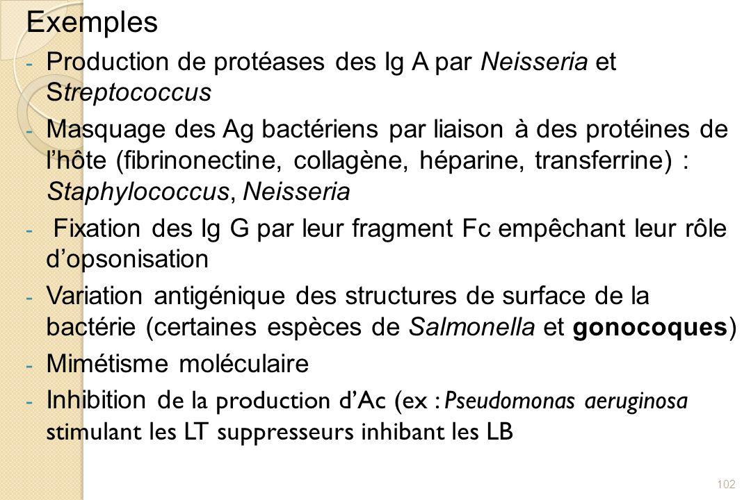 Exemples - Production de protéases des Ig A par Neisseria et Streptococcus - Masquage des Ag bactériens par liaison à des protéines de lhôte (fibrinon