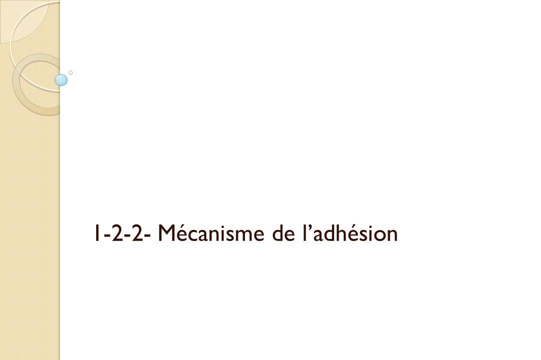 1-2-2- Mécanisme de ladhésion