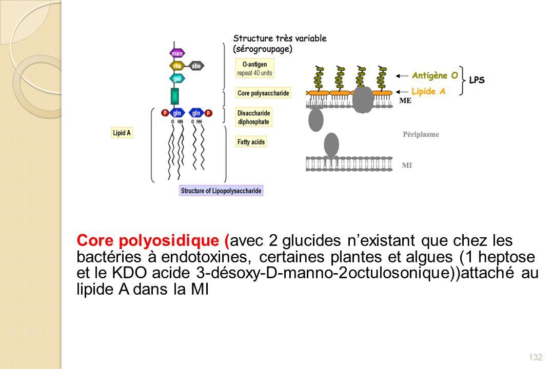 132 Core polyosidique (avec 2 glucides nexistant que chez les bactéries à endotoxines, certaines plantes et algues (1 heptose et le KDO acide 3-désoxy