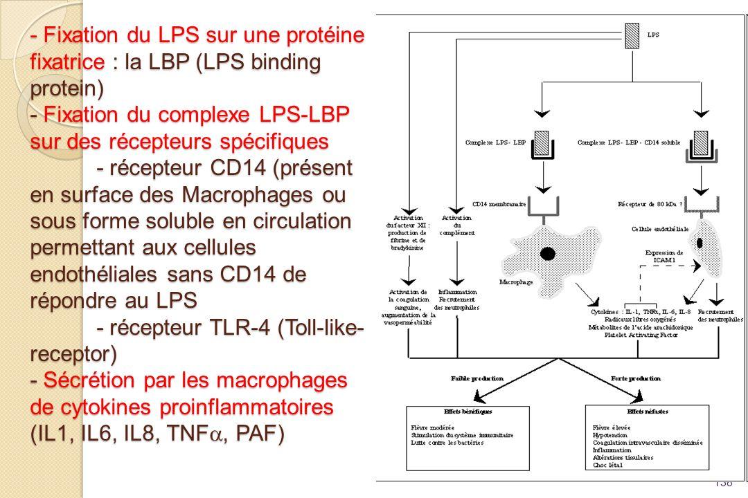 - Fixation du LPS sur une protéine fixatrice : la LBP (LPS binding protein) - Fixation du complexe LPS-LBP sur des récepteurs spécifiques - récepteur