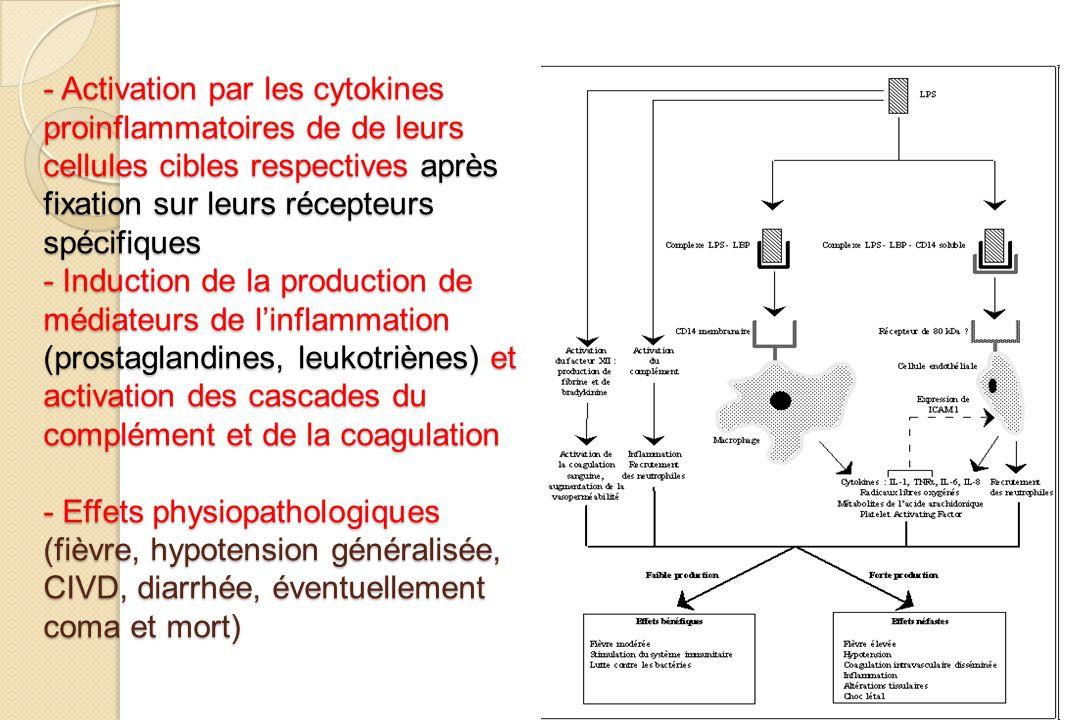 - Activation par les cytokines proinflammatoires de de leurs cellules cibles respectives après fixation sur leurs récepteurs spécifiques - Induction d