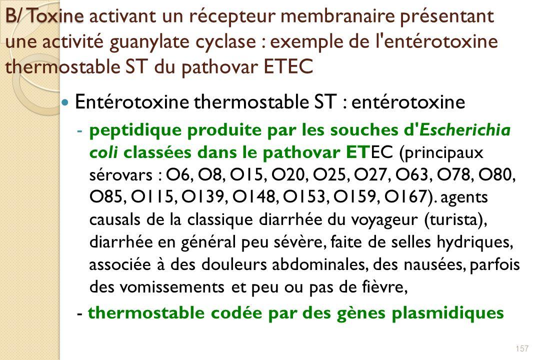 B/ Toxine B/ Toxine activant un récepteur membranaire présentant une activité guanylate cyclase : exemple de l'entérotoxine thermostable ST du pathova