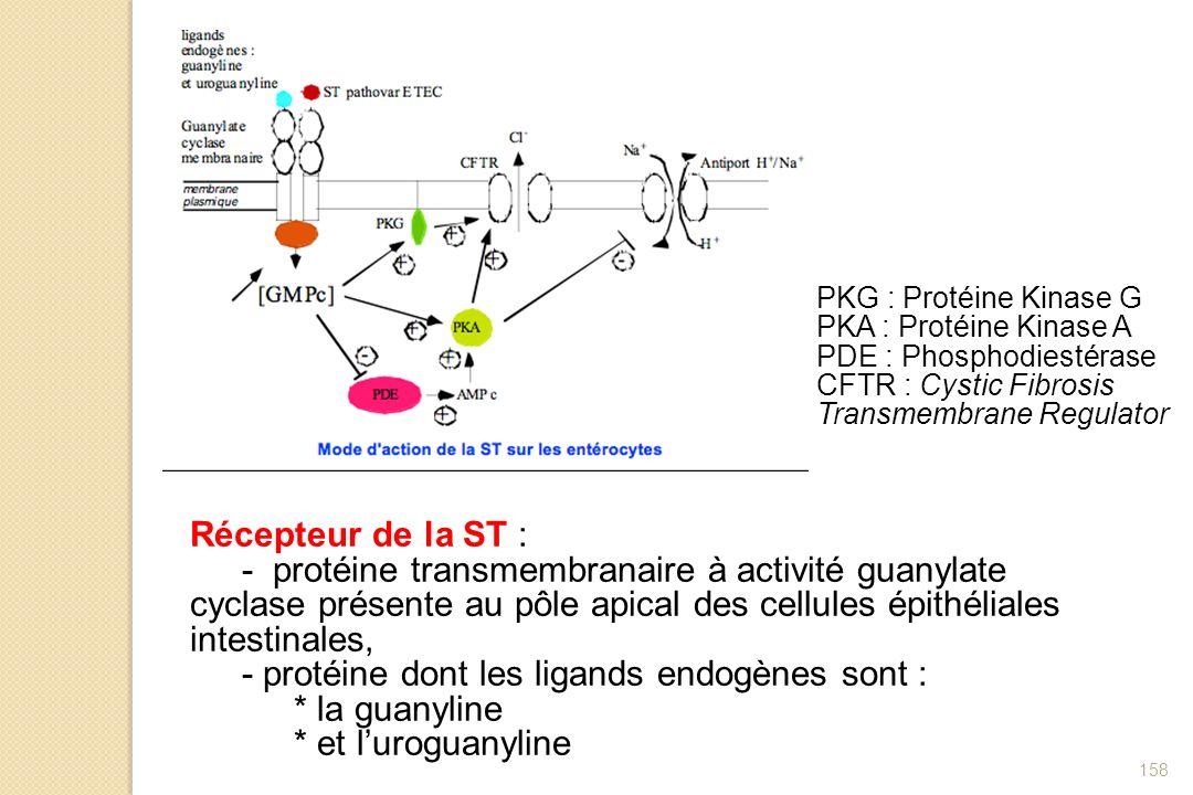 158 Récepteur de la ST : - protéine transmembranaire à activité guanylate cyclase présente au pôle apical des cellules épithéliales intestinales, - pr