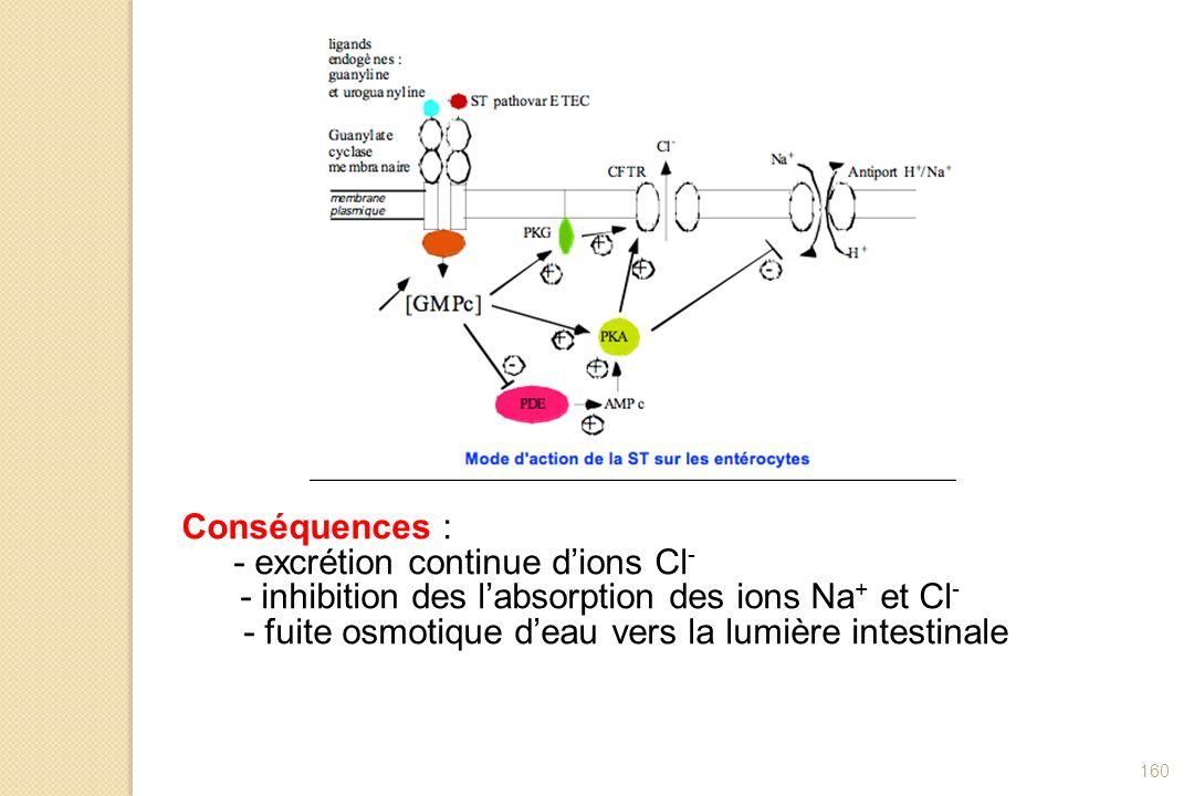 160 Conséquences : - excrétion continue dions Cl - - inhibition des labsorption des ions Na + et Cl - - fuite osmotique deau vers la lumière intestina