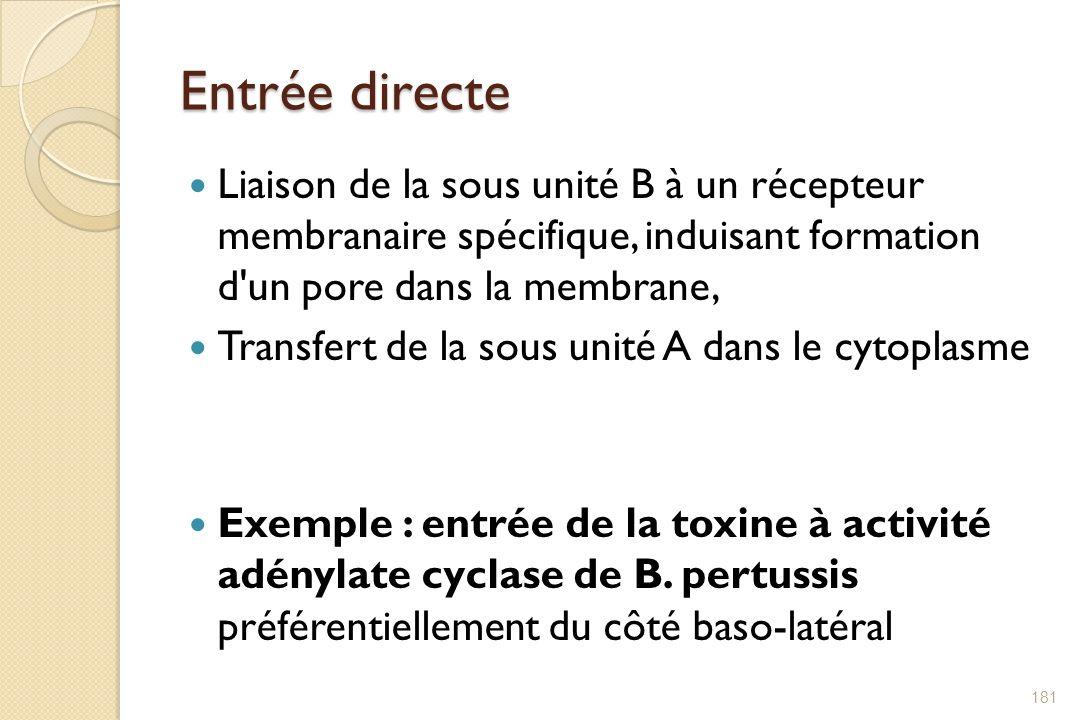 Entrée directe Liaison de la sous unité B à un récepteur membranaire spécifique, induisant formation d'un pore dans la membrane, Transfert de la sous