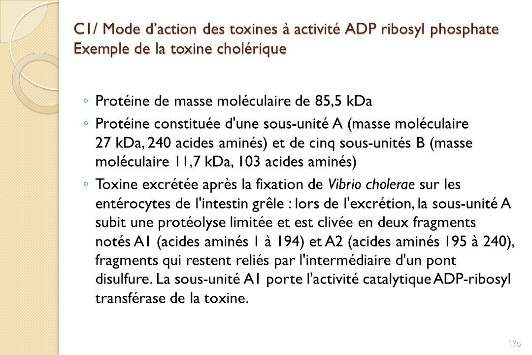 C1/ Mode daction des toxines à activité ADP ribosyl phosphate Exemple de la toxine cholérique Protéine de masse moléculaire de 85,5 kDa Protéine const