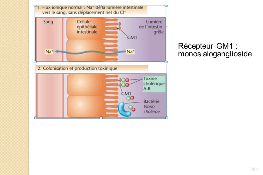 186 Récepteur GM1 : monosialoganglioside