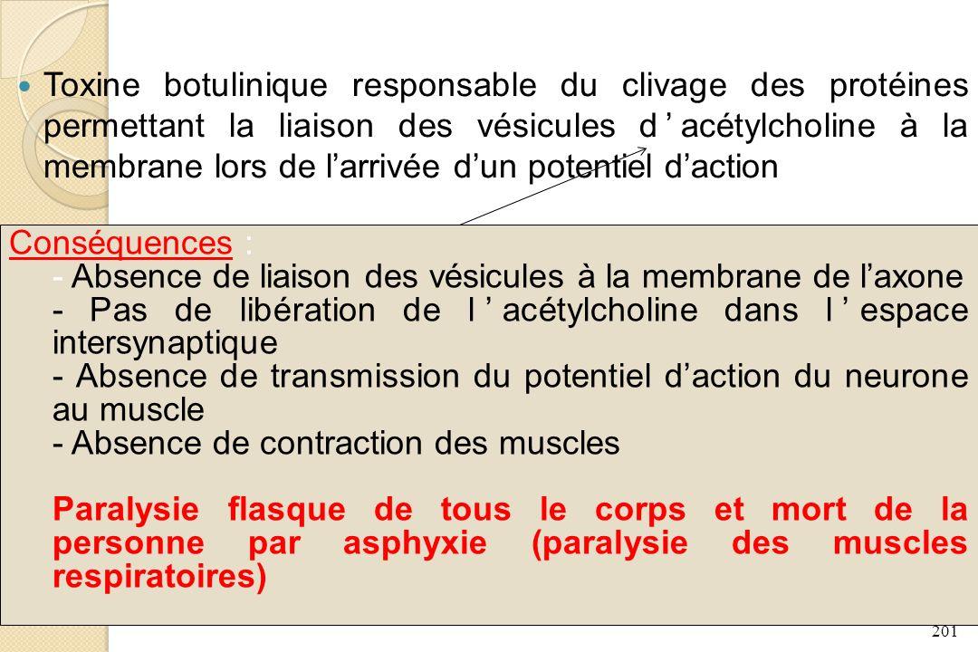 201 Toxine botulinique responsable du clivage des protéines permettant la liaison des vésicules dacétylcholine à la membrane lors de larrivée dun pote