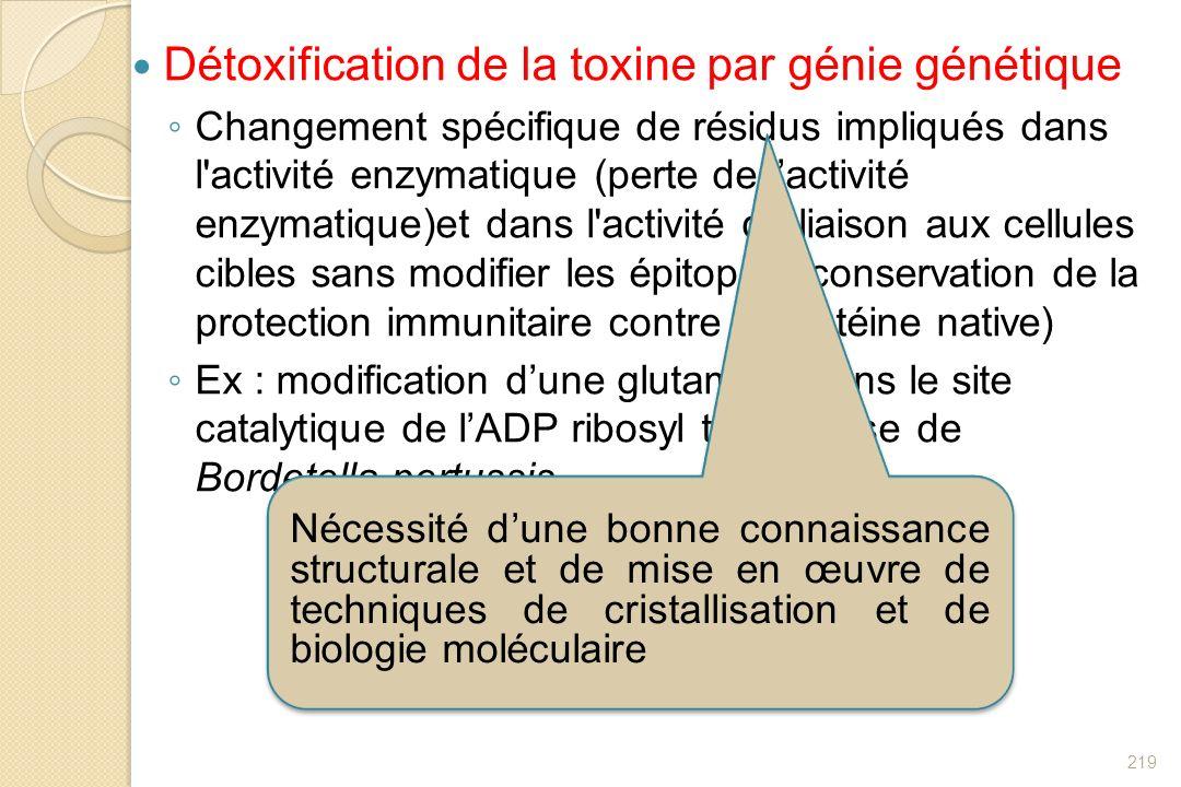 Détoxification de la toxine par génie génétique Changement spécifique de résidus impliqués dans l'activité enzymatique (perte de lactivité enzymatique