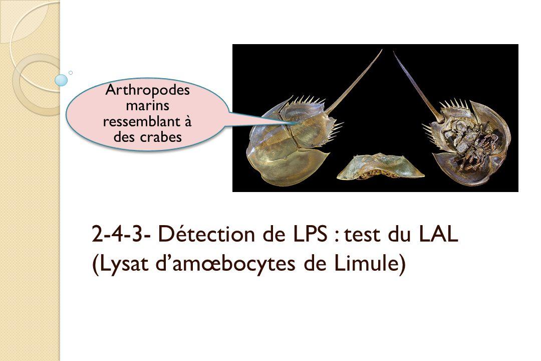 2-4-3- Détection de LPS : test du LAL (Lysat damœbocytes de Limule) Arthropodes marins ressemblant à des crabes