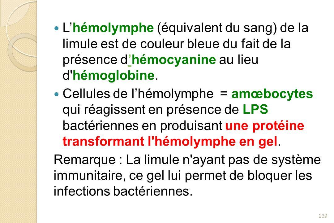 Lhémolymphe (équivalent du sang) de la limule est de couleur bleue du fait de la présence dhémocyanine au lieu d'hémoglobine. Cellules de lhémolymphe