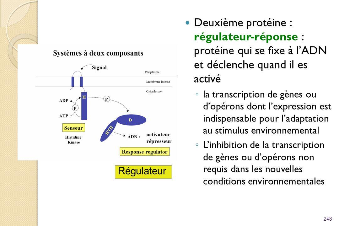 Deuxième protéine : régulateur-réponse : protéine qui se fixe à lADN et déclenche quand il es activé la transcription de gènes ou dopérons dont lexpre